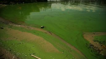 Ohio State scientists study runoff to stop toxic algae in the Great Lakes