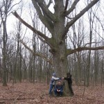 """A Tree """"Library"""" in Downriver Detroit"""