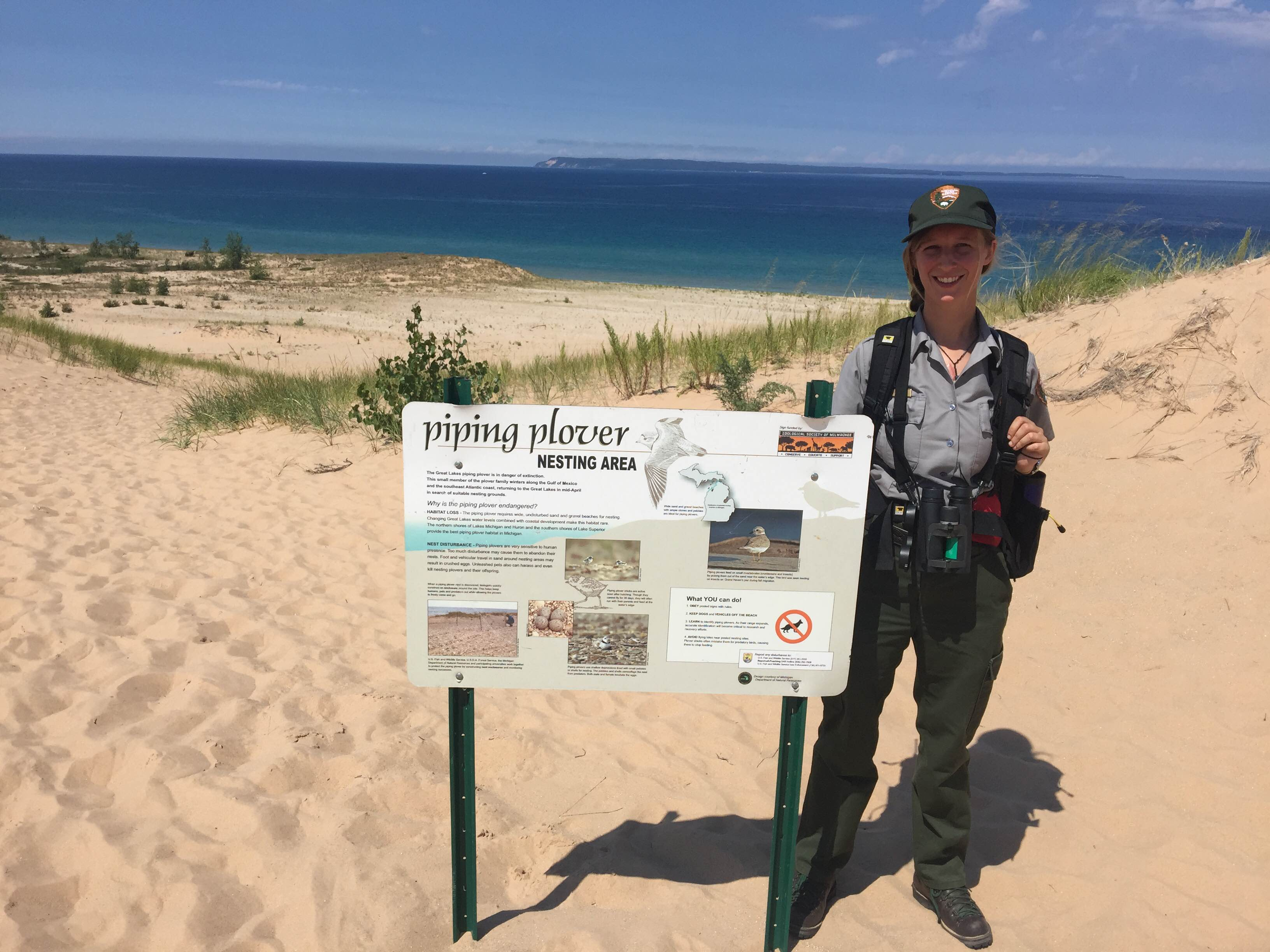 Piping plovers flock to local beaches