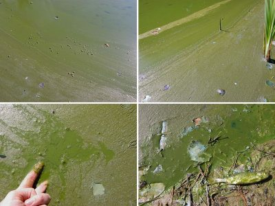 Algae: a Great Lakes' ancient mystery
