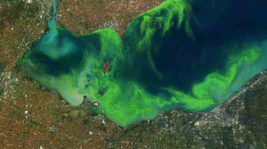Satellite image, October 2011: The extent of the worst algae bloom seen on Lake Erie since the 70s (NOAA/NASA).