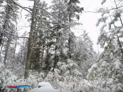 A Winter Walk in the Woods – Preserving our Forests and a Lumberjack's Story