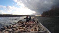 Carp Advance: Real and potential impacts of invasive fish throughout the Midwest