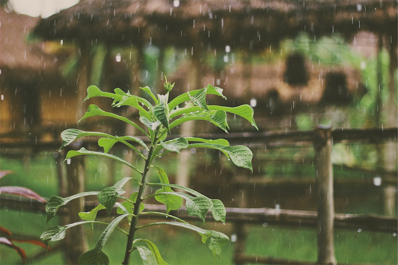 Rain falling on plant