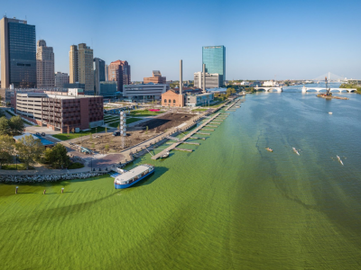 Green algae leads to water advisory for Maumee River near Downtown Toledo