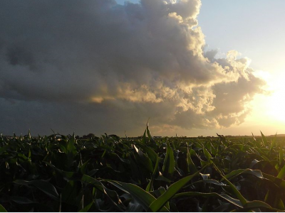 Conservationists renew pressure on Congress to reform ethanol mandate