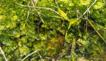 Photo courtesy of USEPA via Wikimedia