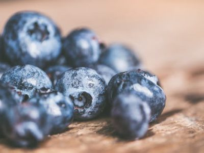 Wild Blueberry Pudding