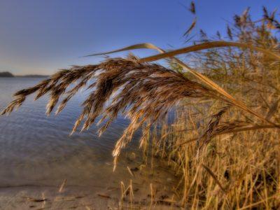 Michigan agencies split on protecting critical coastal wetland near Lake St. Clair