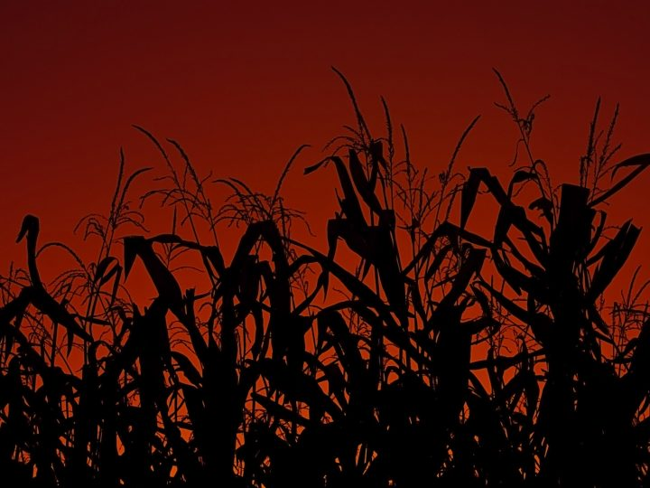 Will the current corn-ethanol mandate be reformed?