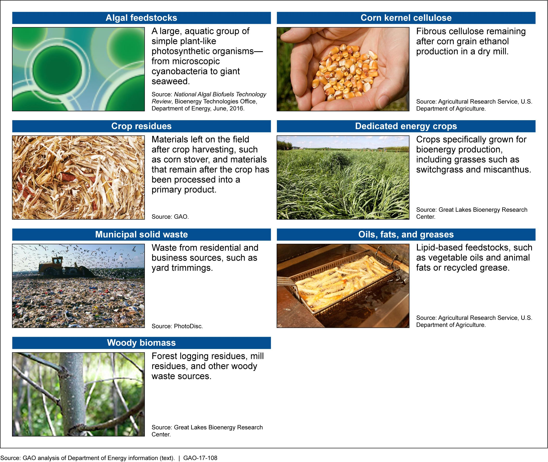 Examples Of Advanced Biofuels Feedstocks Great Lakes Now