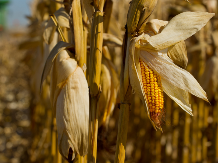 EPA report cites adverse conservation impact from biofuel production