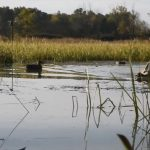 EPA awards Great Lakes grants to Central Michigan, Clarkson