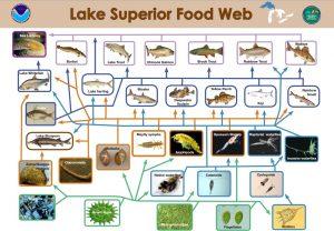 Image by NOAA Great Lakes Environmental Research Laboratory via wikimedia