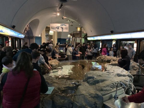 Board a Ship, See Some Fish, Learn the History: Great Lakes Museums, Aquariums and Forts