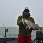 Walleye: Lake Erie population skyrockets. Again.