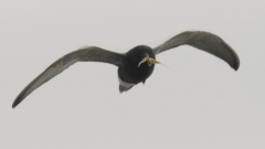 Great Lakes Moment: Decline of bird species should serve as a warning