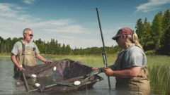 Wetland Wisdom: Documentary looks at breakthrough in Great Lakes wetland research