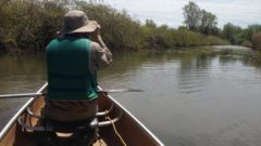U.S., Canadian researchers conduct binational birds conservation research