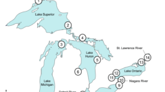 Herring gull eggs help monitor Great Lakes ecosystems