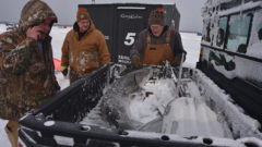 Short Season: Sturgeon spearing plays big role in conservation efforts for the ancient fish