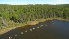 Bolder Fish: New study looks at how pandemic antidepressant use might affect freshwater ecosystems
