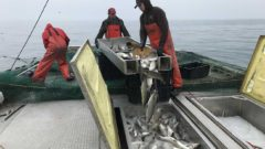 A big fight in Lansing over fishing rules on the Great Lakes