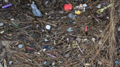 Plastic debris is getting into the Great Lakes, our drinking water, and our food