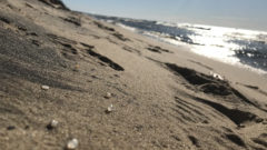 Chemical Impact: Microplastic pollution more complex than we think, says new research