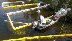 Bacteria Cleanup: Should we let nature clean up oil spills?