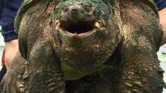 Depleted wetlands impact freshwater turtles in Toronto