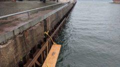 Duckling Docks: Toronto installs floating docks to save drowning birds