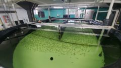 The Farmory: Is indoor fish farming a viable way of tackling declining fish populations?