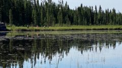 Animal Check: New project to monitor aquatic species that live near proposed nuclear storage sites